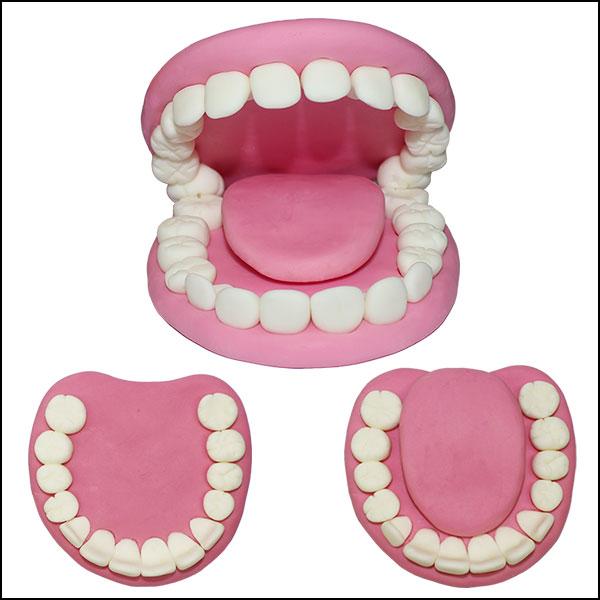 [척척박사네2098] 치아모형(윗니와 아랫니)- 3세트
