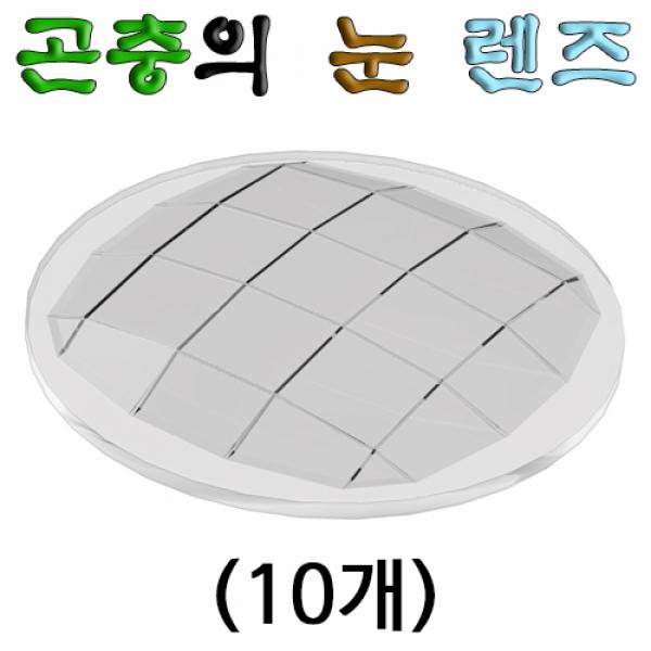 [척척박사네2057] 곤충의 눈 렌즈(10개)