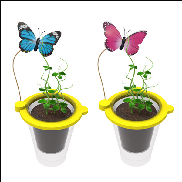 [척척박사네2585] 나비와 콩나무 키우기