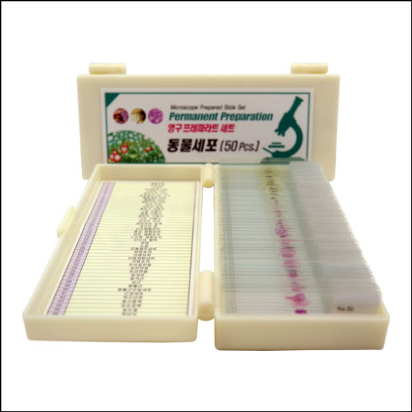 [척척박사네2939] 영구 프레파라트 동물세포(50pcs)