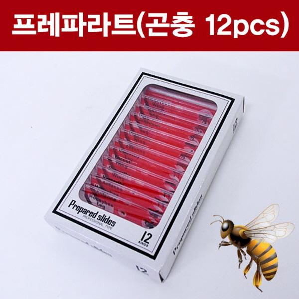 [척척박사네2122] 프레파라트(곤충 12pcs)