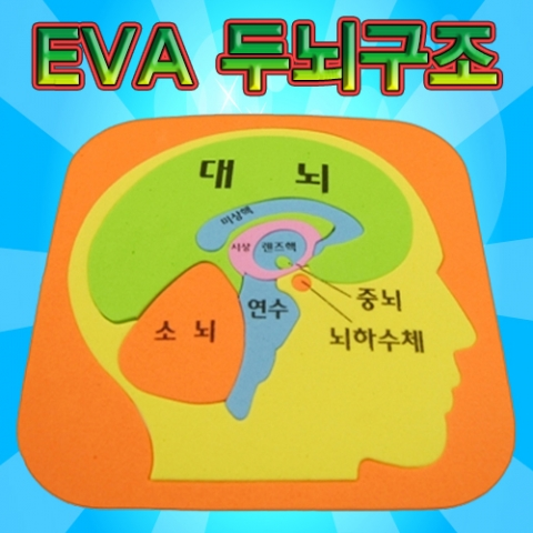 [척척박사네2040] EVA 두뇌구조퍼즐
