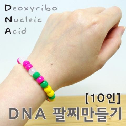 [척척박사네1733] DNA팔찌 만들기(10인용)